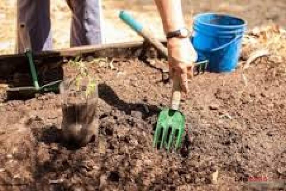 5 bước cơ bản trồng rau sạch tại nhà