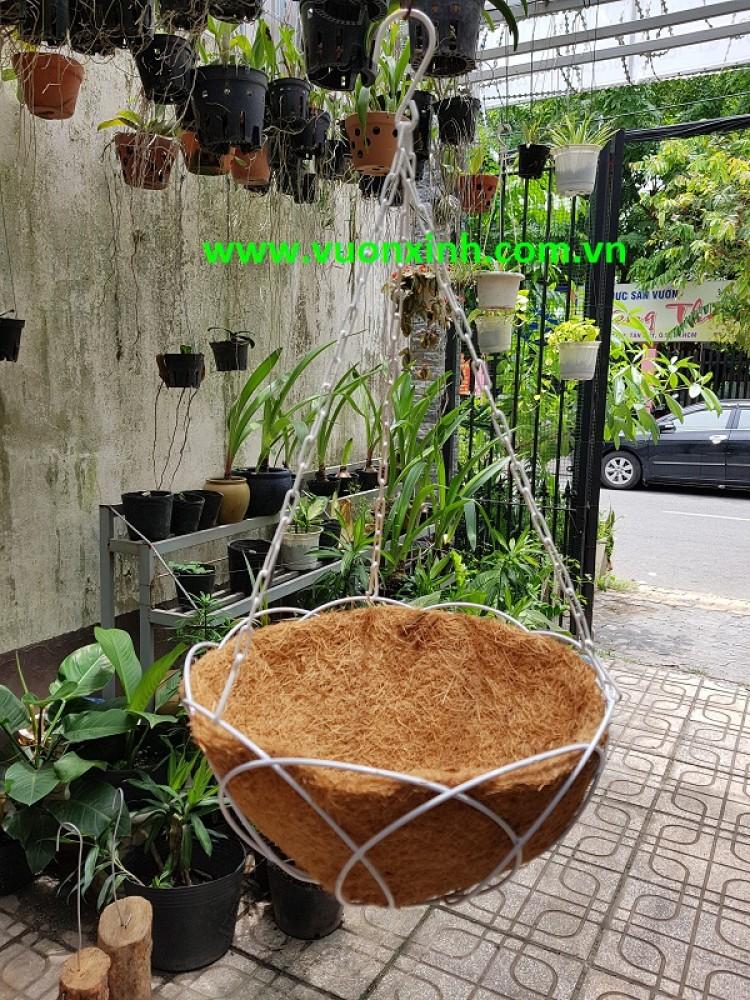 Chậu dừa treo hoa đào