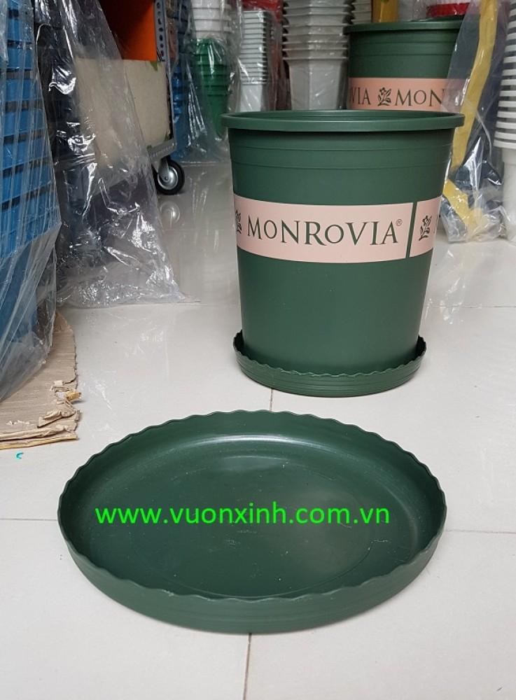 Đĩa chậu Monrovia size 1