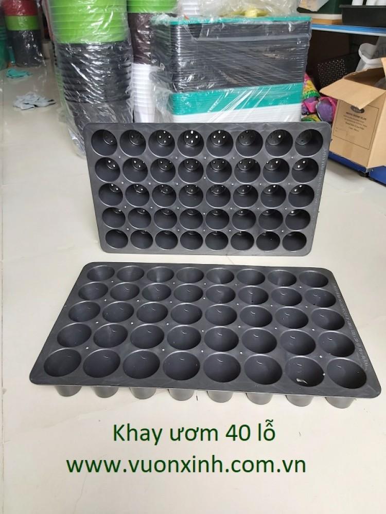 Khay ươm 40 lỗ _ Phi 70