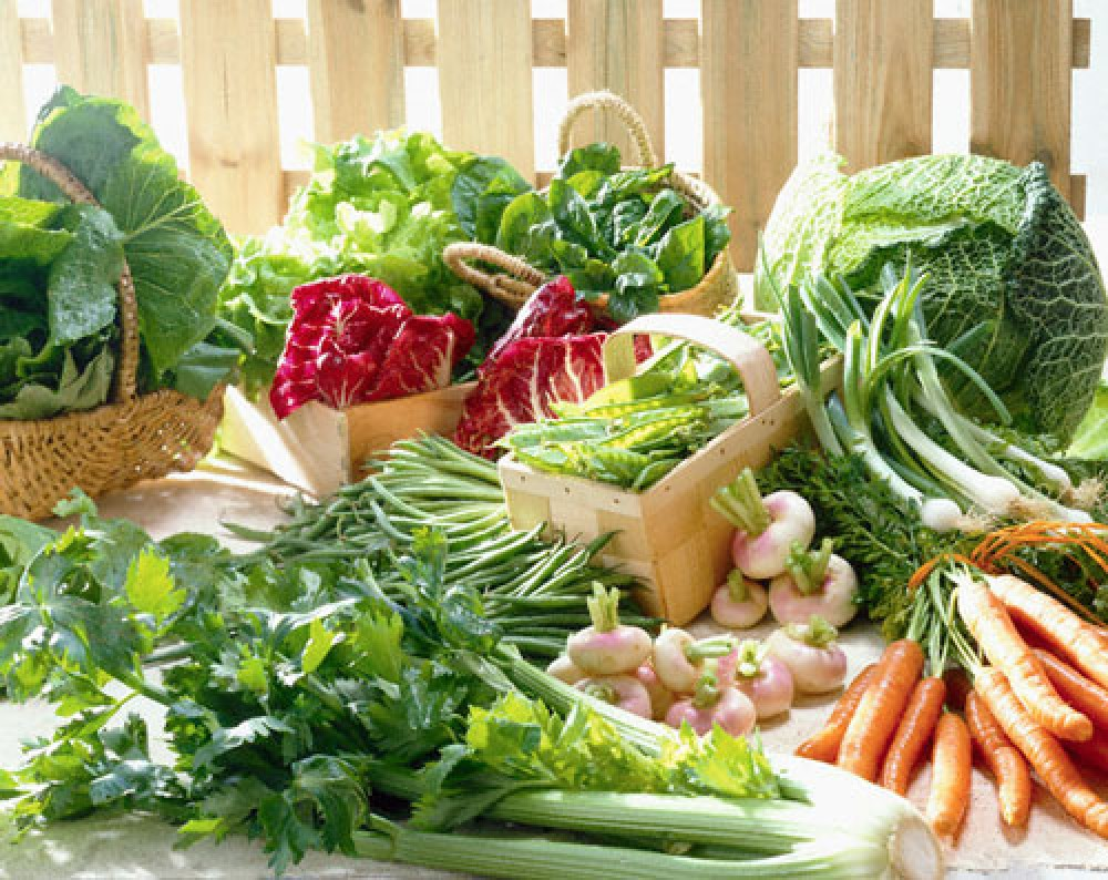 Kỹ thuật trồng và chăm sóc rau mùa mưa
