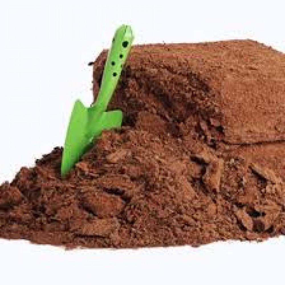 Mụn dừa? Cách xử lý mụn dừa trồng rau sạch