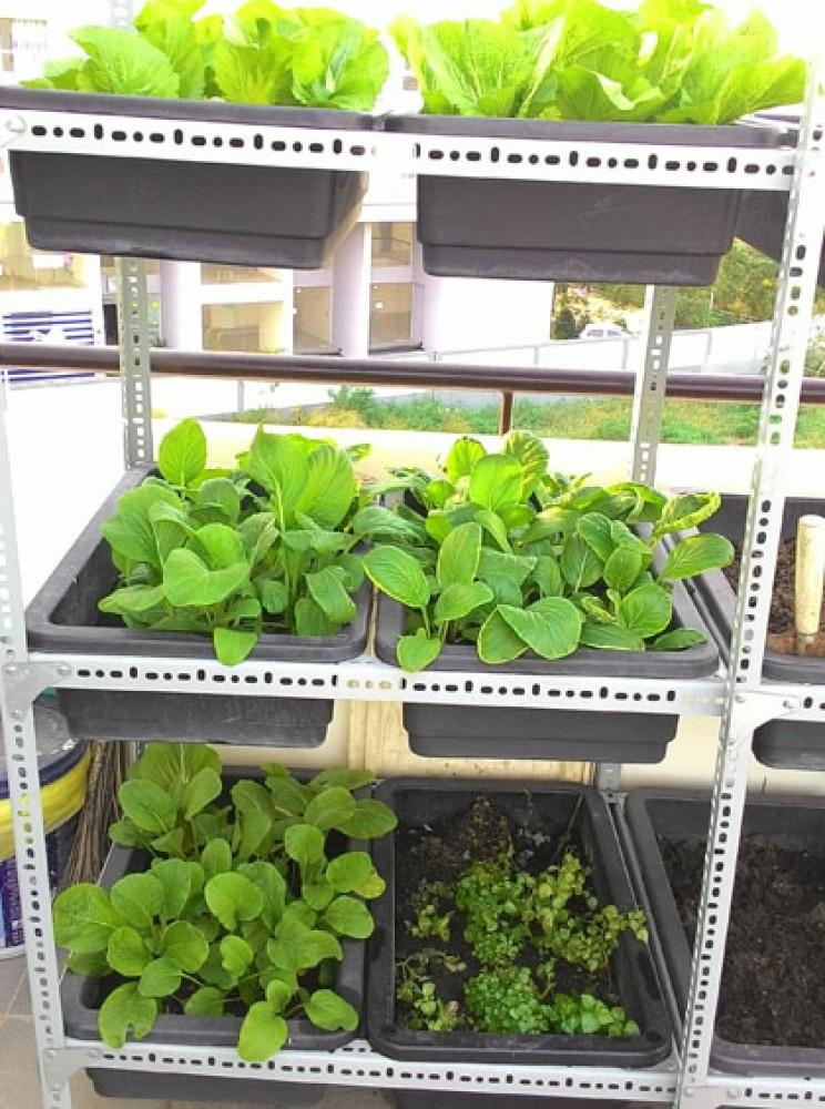 Nhà 7 người ăn rau thoải mái nhờ mảnh vườn sân thượng 25m2